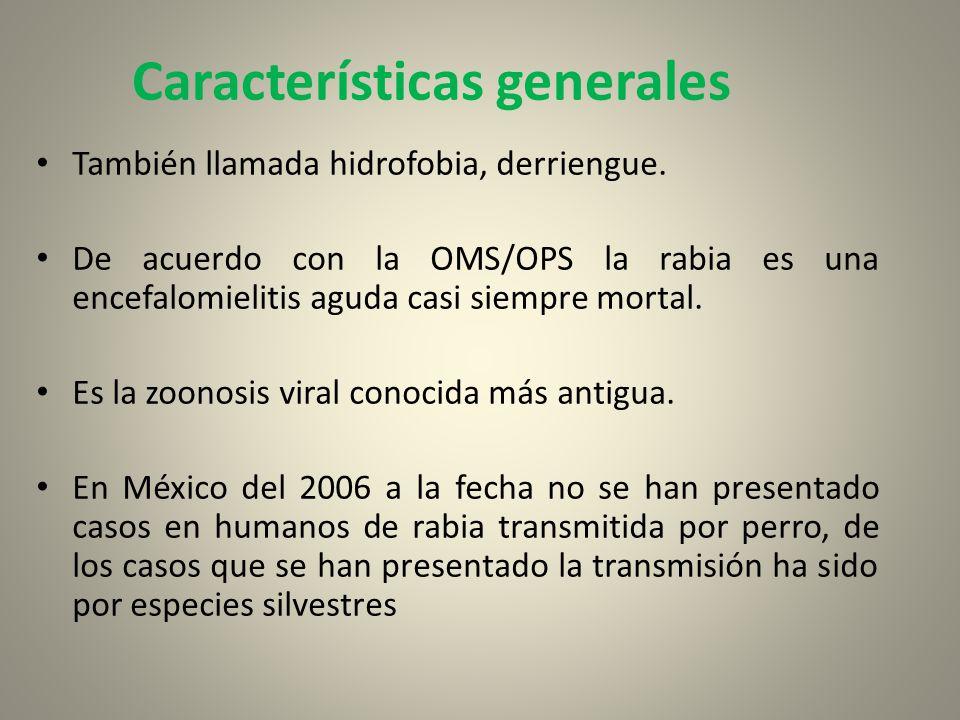 Características generales También llamada hidrofobia, derriengue. De acuerdo con la OMS/OPS la rabia es una encefalomielitis aguda casi siempre mortal