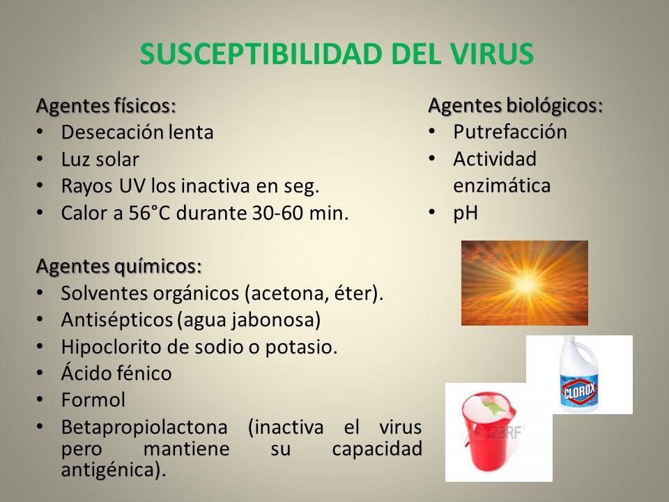 SUSCEPTIBILIDAD DEL VIRUS Agentes físicos: Desecación lenta Luz solar Rayos UV los inactiva en seg. Calor a 56°C durante 30-60 min. Agentes químicos: