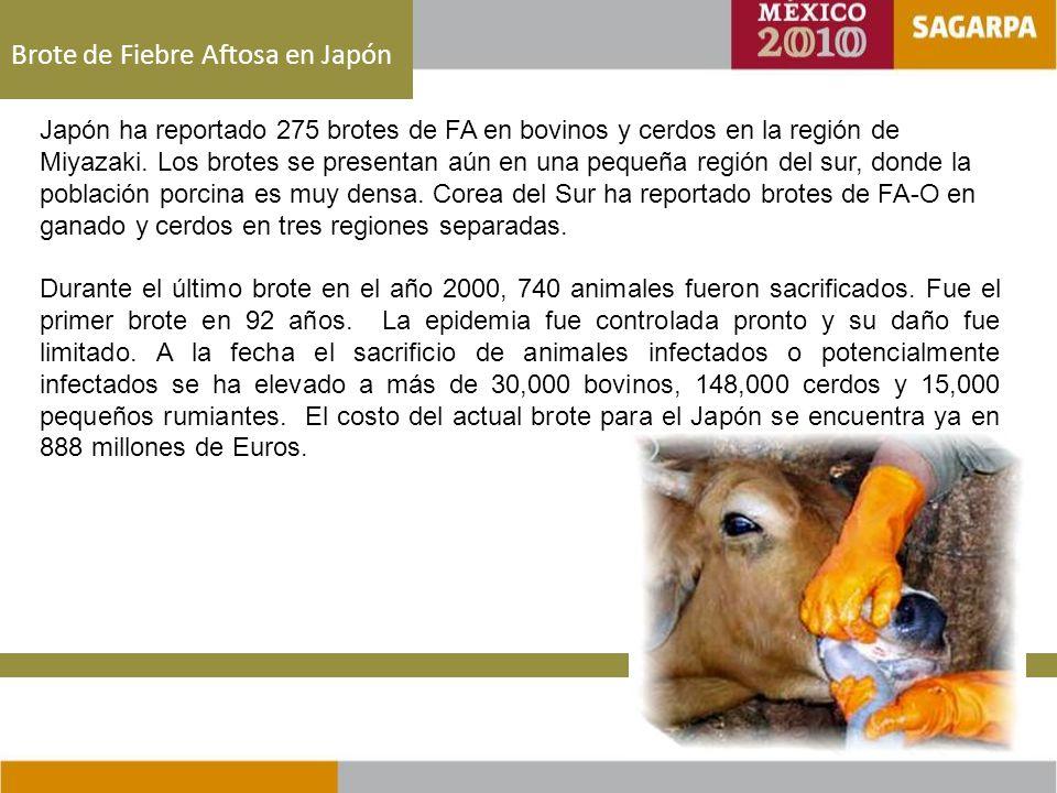Brote de Fiebre Aftosa en Japón Japón ha reportado 275 brotes de FA en bovinos y cerdos en la región de Miyazaki.