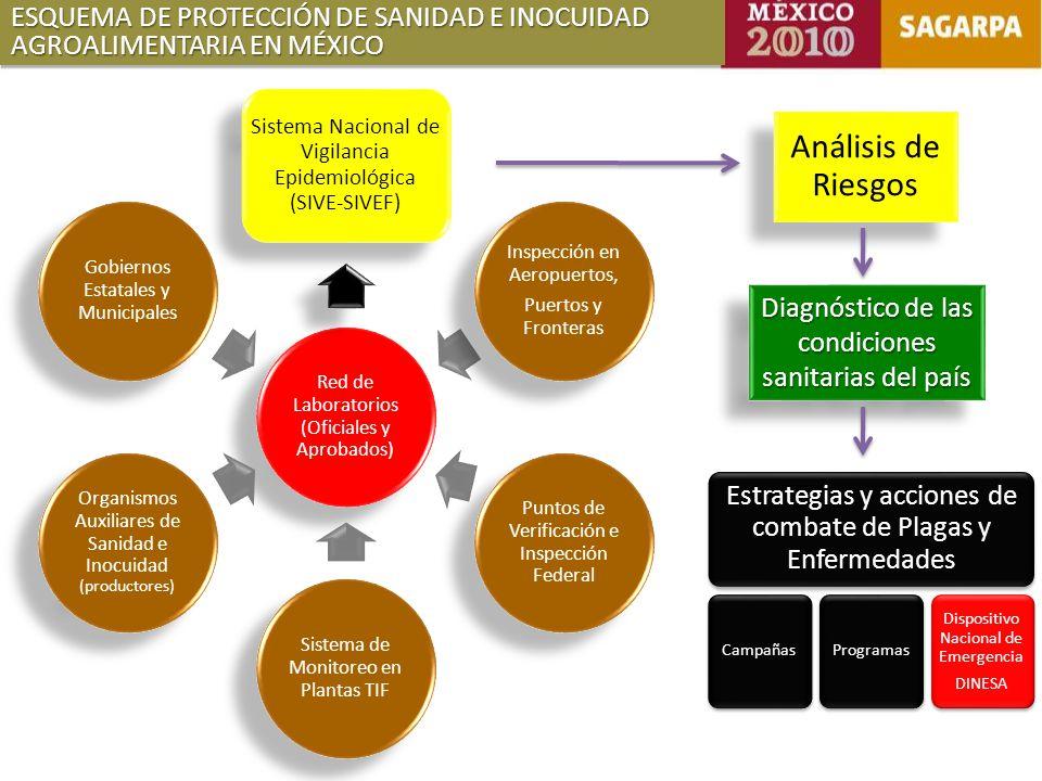 ESQUEMA DE PROTECCIÓN DE SANIDAD E INOCUIDAD AGROALIMENTARIA EN MÉXICO Red de Laboratorios (Oficiales y Aprobados) Sistema Nacional de Vigilancia Epidemiológica (SIVE-SIVEF) Inspección en Aeropuertos, Puertos y Fronteras Puntos de Verificación e Inspección Federal Sistema de Monitoreo en Plantas TIF Organismos Auxiliares de Sanidad e Inocuidad (productores) Gobiernos Estatales y Municipales Análisis de Riesgos Diagnóstico de las condiciones sanitarias del país Estrategias y acciones de combate de Plagas y Enfermedades CampañasProgramas Dispositivo Nacional de Emergencia DINESA