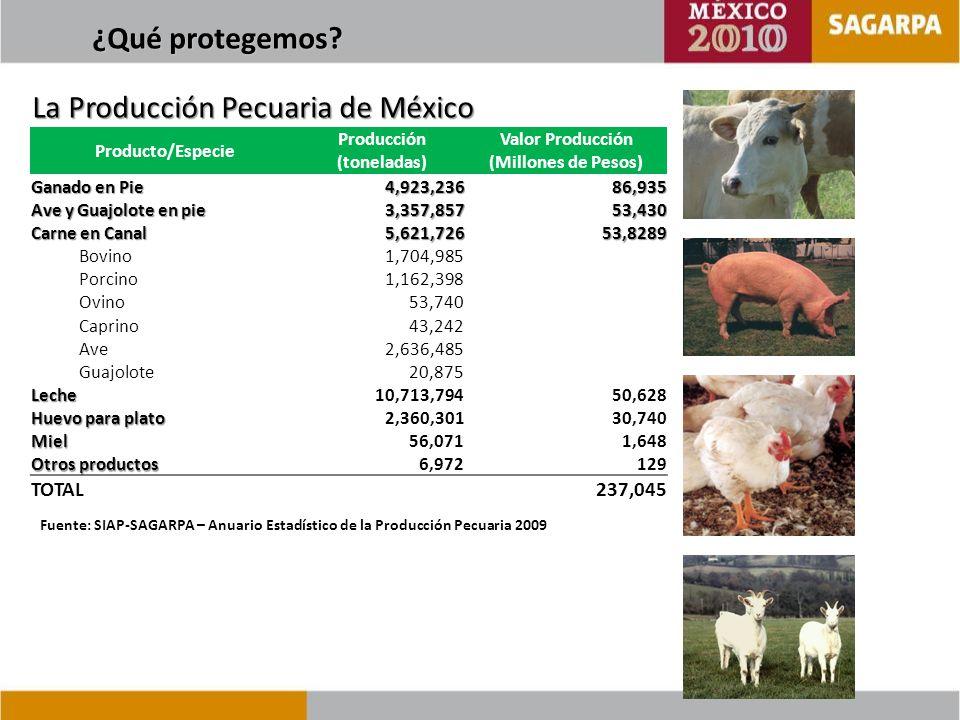 Control Libre Erradicación 2012 Metas al 2012 - Reconocimiento en Fase Libre de los Estados de Coahuila, Chihuahua y Nuevo León y en las zonas Norte de Sinaloa, Centro de Durango y Noroeste de Tamaulipas.