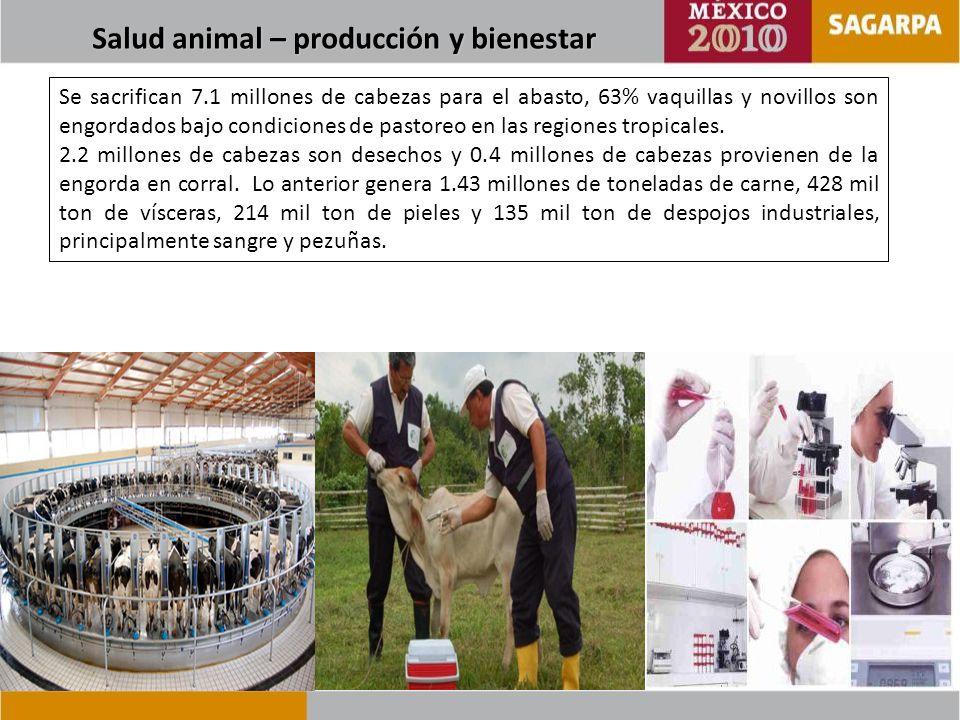 Comisión para la Prevención de la Fiebre Aftosa y Otras Enfermedades Exóticas de los Animales (CPA)* 6,915 casos 58,135 muestras 57,680 análisis Centro Nacional de Servicios de Diagnóstico en Salud Animal (CENASA) 1,391 casos 17,158 muestras 32,943 análisis Centro Nacional de Servicios de Constatación en Salud Animal (CENAPA) Constatación en alimentos y químico farmacéuticos (6,299 muestras y 56,691 análisis) Diagnóstico y Constatación en parasitología (3,060 muestras y 6,120 análisis) Diagnóstico acuícola (557 muestras y 557 análisis) Productora Nacional de Biológicos Veterinarios (PRONABIVE) 6.7 millones de dosis en apoyo a las Campañas Nacionales Zoosanitarias 0.2 millones de dosis exportadas Notificación de casos de Laboratorio reportados al Sistema Nacional de Vigilancia Epidemiológica 90 Laboratorios 1.5 millones de resultados diagnósticos de enfermedades animales ANÁLISIS Y MUESTRAS PROCESADAS EN LOS LABORATORIOS CENTRALES DE SALUD ANIMAL DURANTE EL PRIMER CUATRIMESTRE DEL 2010*