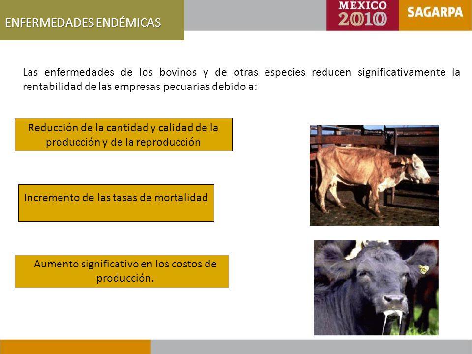 ENFERMEDADES ENDÉMICAS Las enfermedades de los bovinos y de otras especies reducen significativamente la rentabilidad de las empresas pecuarias debido a: Reducción de la cantidad y calidad de la producción y de la reproducción Incremento de las tasas de mortalidad Aumento significativo en los costos de producción.