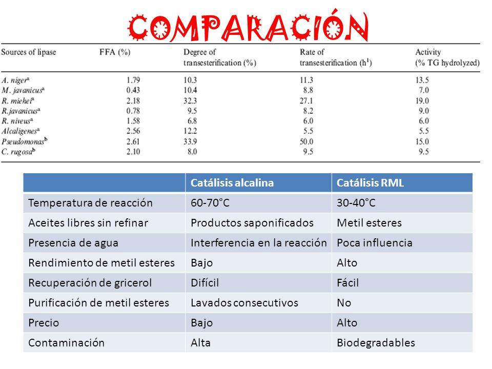 COMPARACIÓN Catálisis alcalinaCatálisis RML Temperatura de reacción60-70°C30-40°C Aceites libres sin refinarProductos saponificadosMetil esteres Presencia de aguaInterferencia en la reacciónPoca influencia Rendimiento de metil esteresBajoAlto Recuperación de gricerolDifícilFácil Purificación de metil esteresLavados consecutivosNo PrecioBajoAlto ContaminaciónAltaBiodegradables