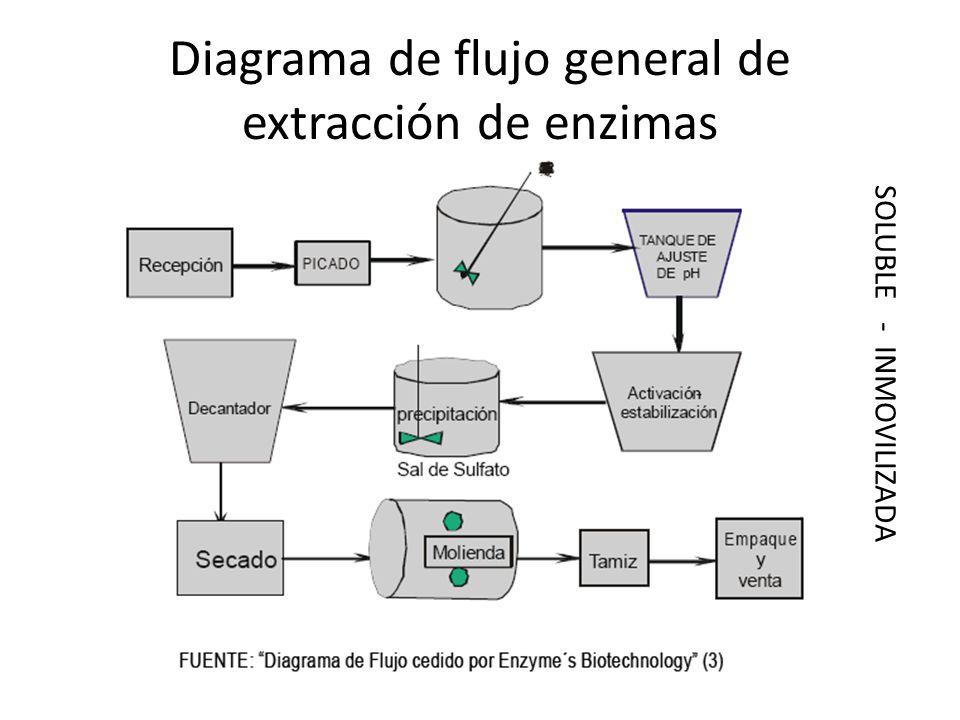 Diagrama de flujo general de extracción de enzimas SOLUBLE - INMOVILIZADA
