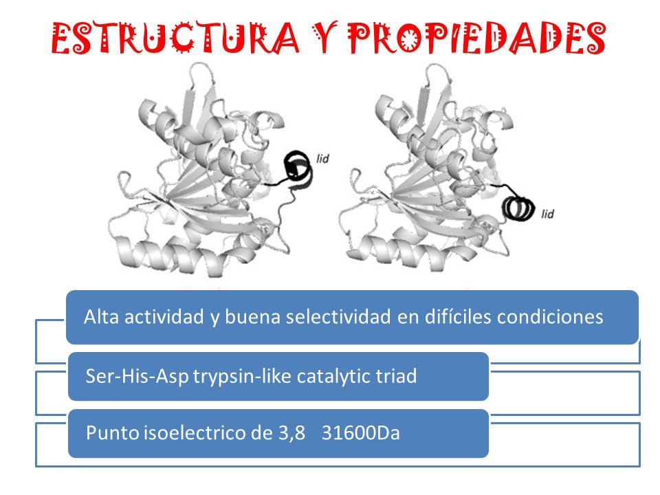 ESTRUCTURA Y PROPIEDADES Alta actividad y buena selectividad en difíciles condiciones Ser-His-Asp trypsin-like catalytic triadPunto isoelectrico de 3,8 31600Da