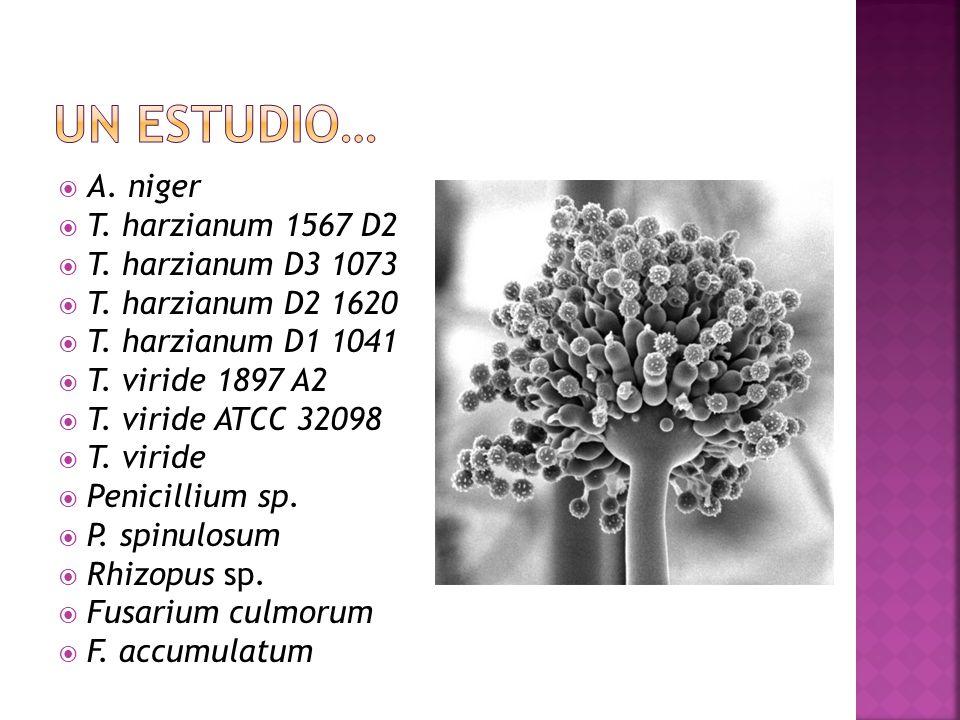 A. niger T. harzianum 1567 D2 T. harzianum D3 1073 T. harzianum D2 1620 T. harzianum D1 1041 T. viride 1897 A2 T. viride ATCC 32098 T. viride Penicill