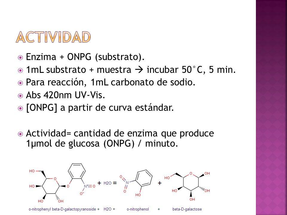 Enzima + ONPG (substrato). 1mL substrato + muestra incubar 50°C, 5 min. Para reacción, 1mL carbonato de sodio. Abs 420nm UV-Vis. [ONPG] a partir de cu