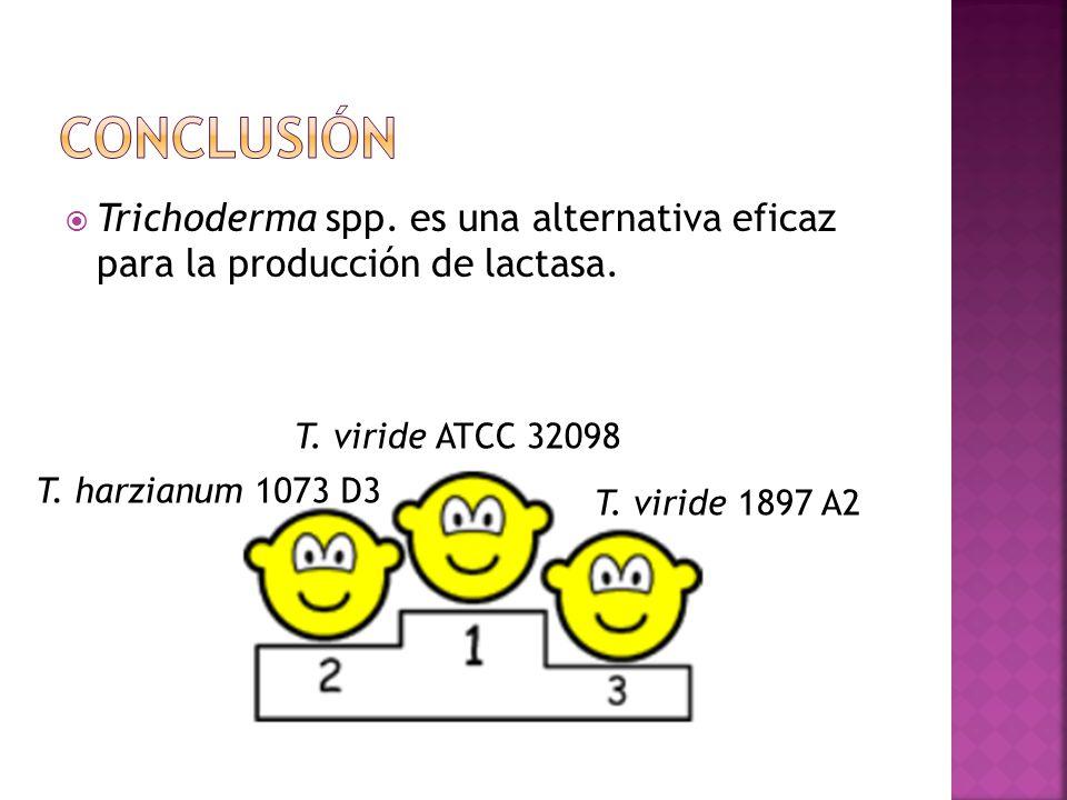 Trichoderma spp. es una alternativa eficaz para la producción de lactasa. T. viride ATCC 32098 T. harzianum 1073 D3 T. viride 1897 A2