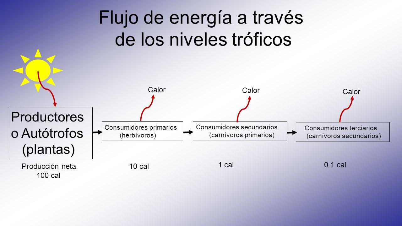 Flujo de energía a través de los niveles tróficos Productores o Autótrofos (plantas) Consumidores primarios (herbívoros) Consumidores secundarios (carnívoros primarios) Consumidores terciarios (carnívoros secundarios) Calor Producción neta 100 cal 10 cal 1 cal 0.1 cal