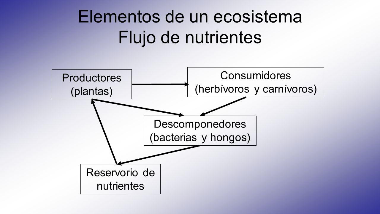 Elementos de un ecosistema Flujo de nutrientes Productores (plantas) Consumidores (herbívoros y carnívoros) Descomponedores (bacterias y hongos) Reser
