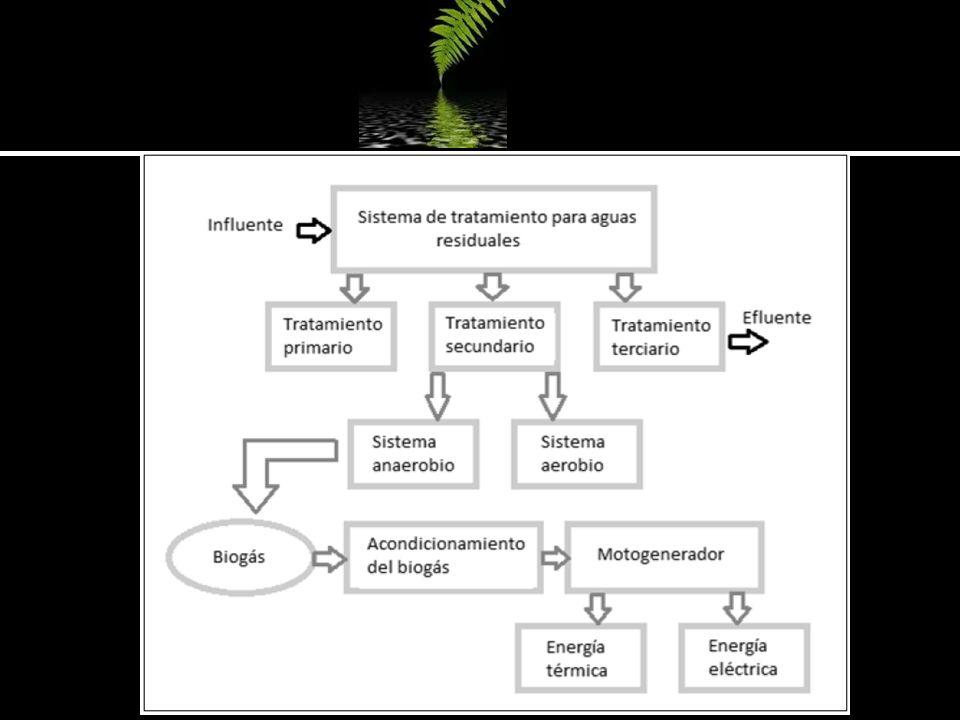 PRODUCTOS: Biogás (CH4 a quemado) Lodo digerido Trituración Regulación de pH Mezclado Flora microbiana Temperatura REQUISITOS