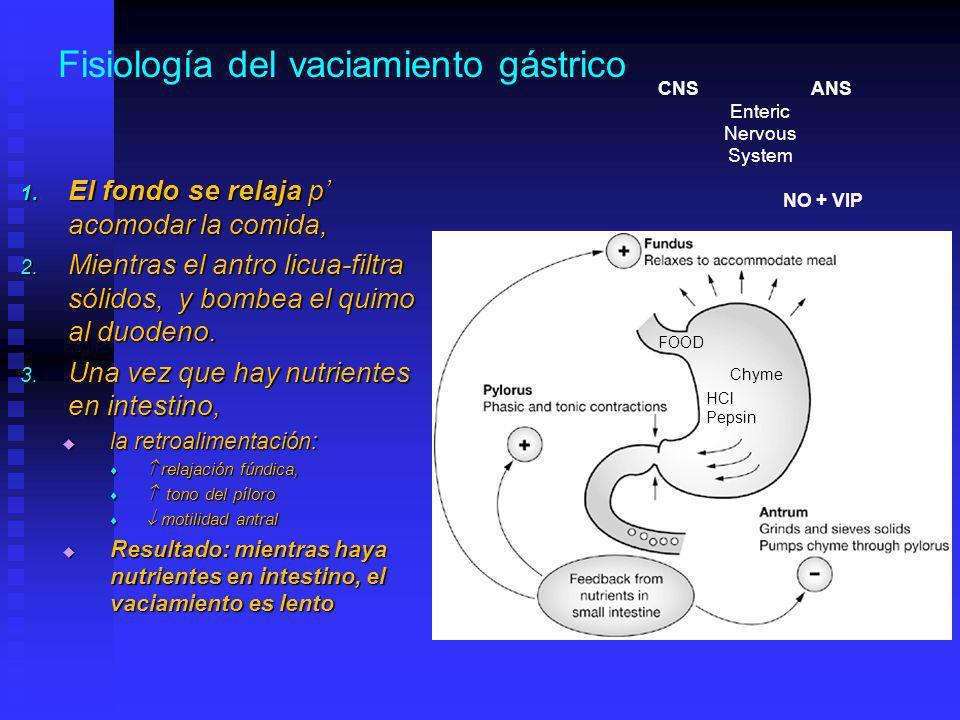 Fisiología del vaciamiento gástrico 1.El fondo se relaja p acomodar la comida, 2.