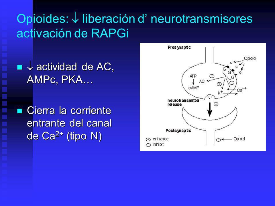 Opioides: liberación d neurotransmisores activación de RAPGi actividad de AC, AMPc, PKA… actividad de AC, AMPc, PKA… Cierra la corriente entrante del canal de Ca 2+ (tipo N) Cierra la corriente entrante del canal de Ca 2+ (tipo N)