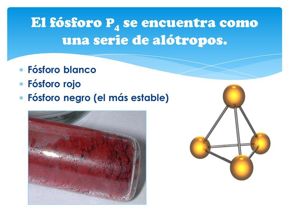 Fósforo blanco Fósforo rojo Fósforo negro (el más estable) El fósforo P 4 se encuentra como una serie de alótropos.