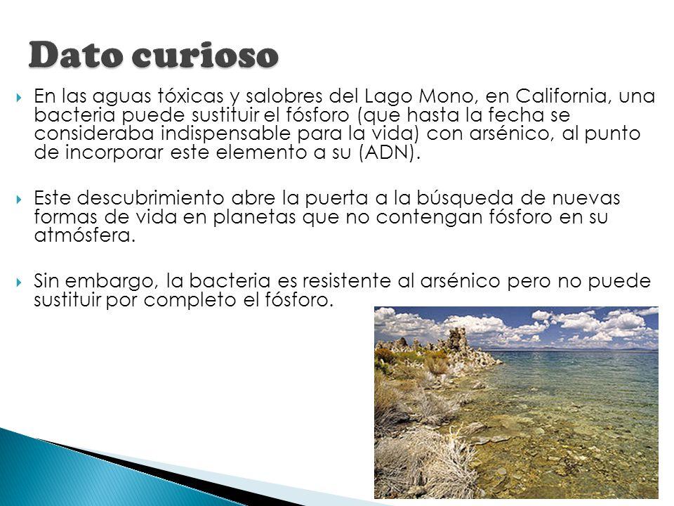 En las aguas tóxicas y salobres del Lago Mono, en California, una bacteria puede sustituir el fósforo (que hasta la fecha se consideraba indispensable