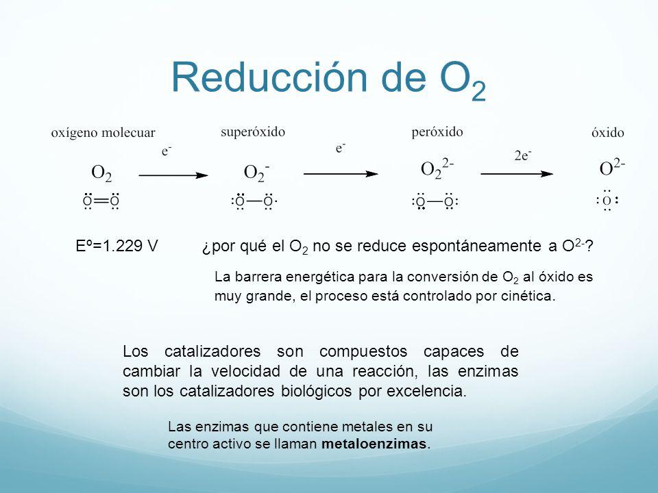 Reducción de O 2 Eº=1.229 V¿por qué el O 2 no se reduce espontáneamente a O 2- ? La barrera energética para la conversión de O 2 al óxido es muy grand