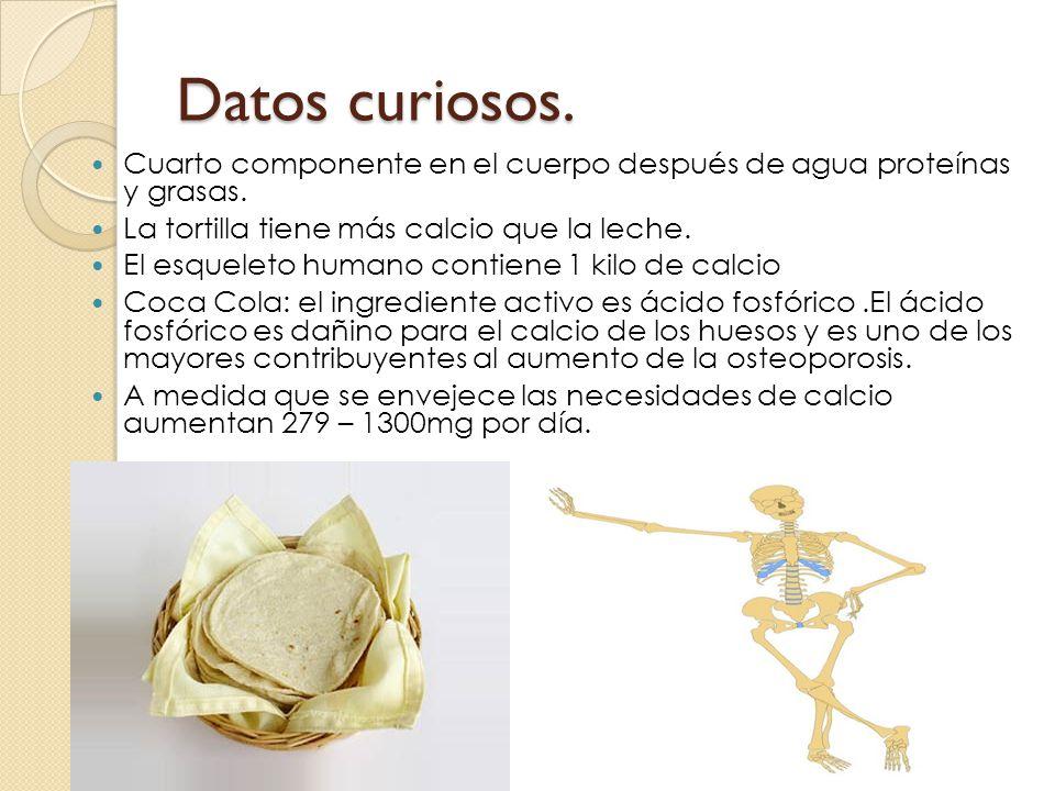 Datos curiosos. Cuarto componente en el cuerpo después de agua proteínas y grasas. La tortilla tiene más calcio que la leche. El esqueleto humano cont
