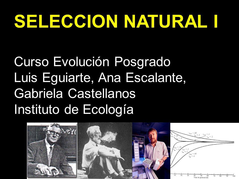 SELECCION NATURAL I Curso Evolución Posgrado Luis Eguiarte, Ana Escalante, Gabriela Castellanos Instituto de Ecología