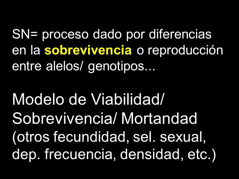 SN= proceso dado por diferencias en la sobrevivencia o reproducción entre alelos/ genotipos... Modelo de Viabilidad/ Sobrevivencia/ Mortandad (otros f