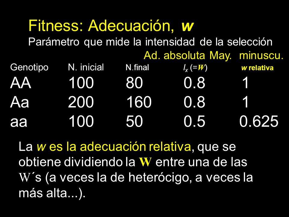 Fitness: Adecuación, w Parámetro que mide la intensidad de la selección Ad. absoluta May. minuscu. Genotipo N. inicial N.finall x (= W ) w relativa AA