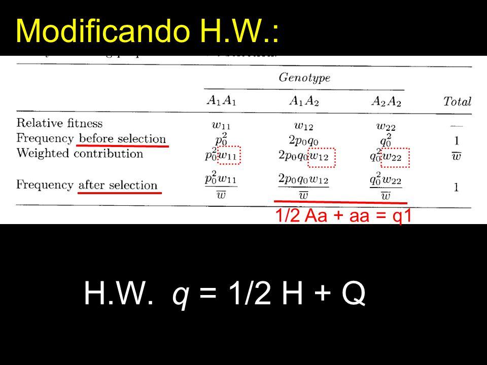 Modificando H.W.: 1/2 Aa + aa = q1 H.W. q = 1/2 H + Q