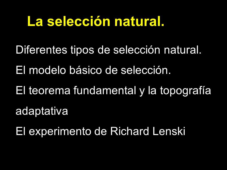 La selección natural. Diferentes tipos de selección natural. El modelo básico de selección. El teorema fundamental y la topografía adaptativa El exper