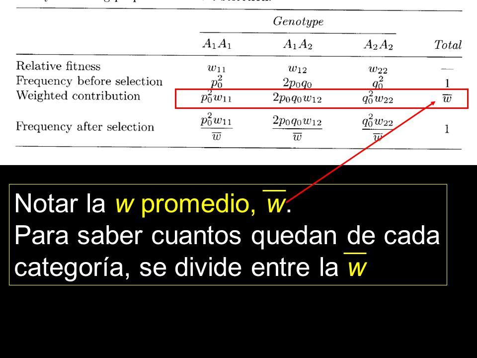 Notar la w promedio, w. Para saber cuantos quedan de cada categoría, se divide entre la w