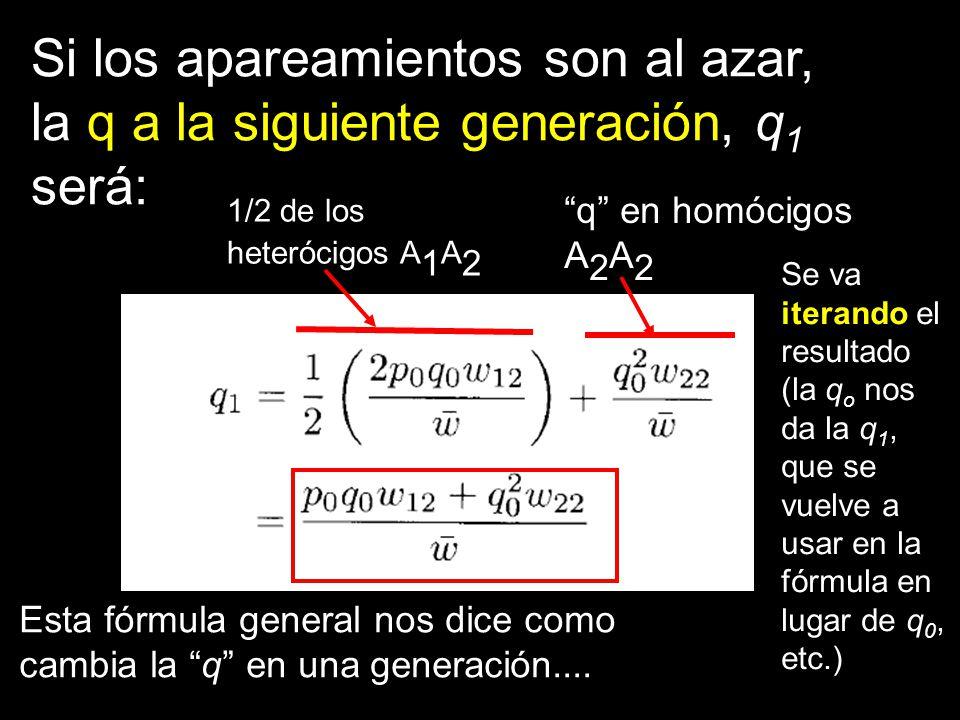 Esta fórmula general nos dice como cambia la q en una generación.... Si los apareamientos son al azar, la q a la siguiente generación, q 1 será: q en