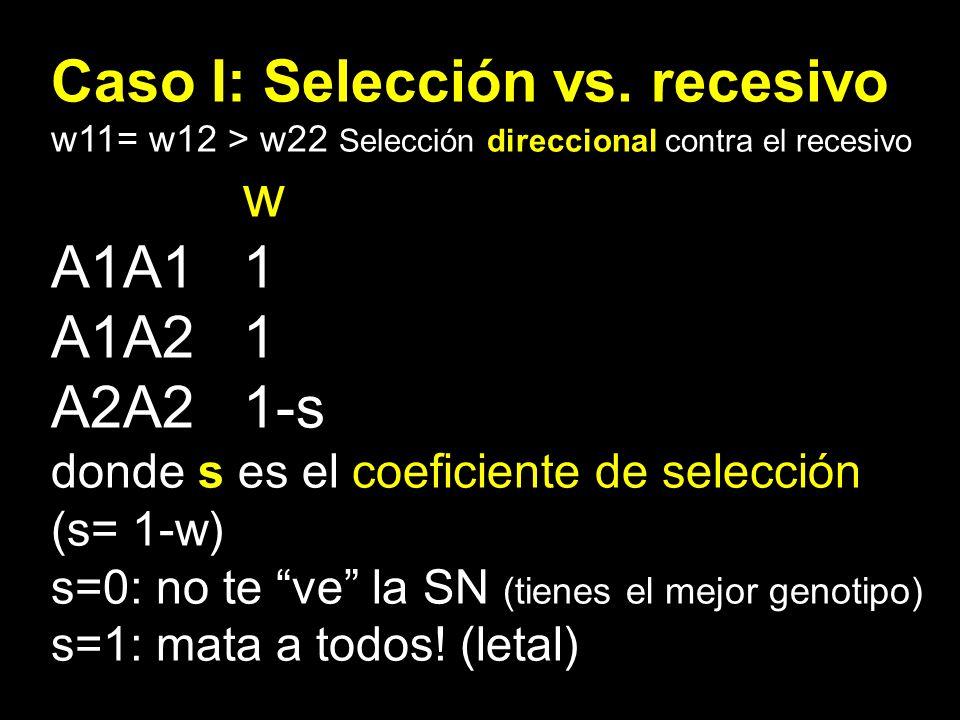 Caso I: Selección vs. recesivo w11= w12 > w22 Selección direccional contra el recesivo w A1A11 A1A21 A2A21-s donde s es el coeficiente de selección (s