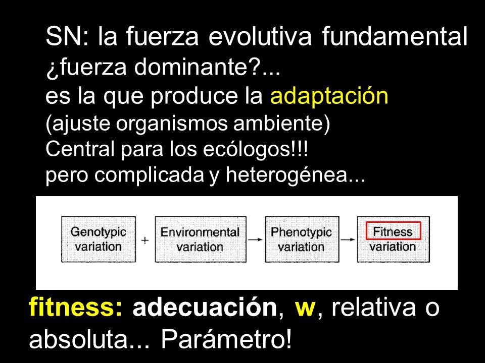 SN: la fuerza evolutiva fundamental ¿fuerza dominante?... es la que produce la adaptación (ajuste organismos ambiente) Central para los ecólogos!!! pe