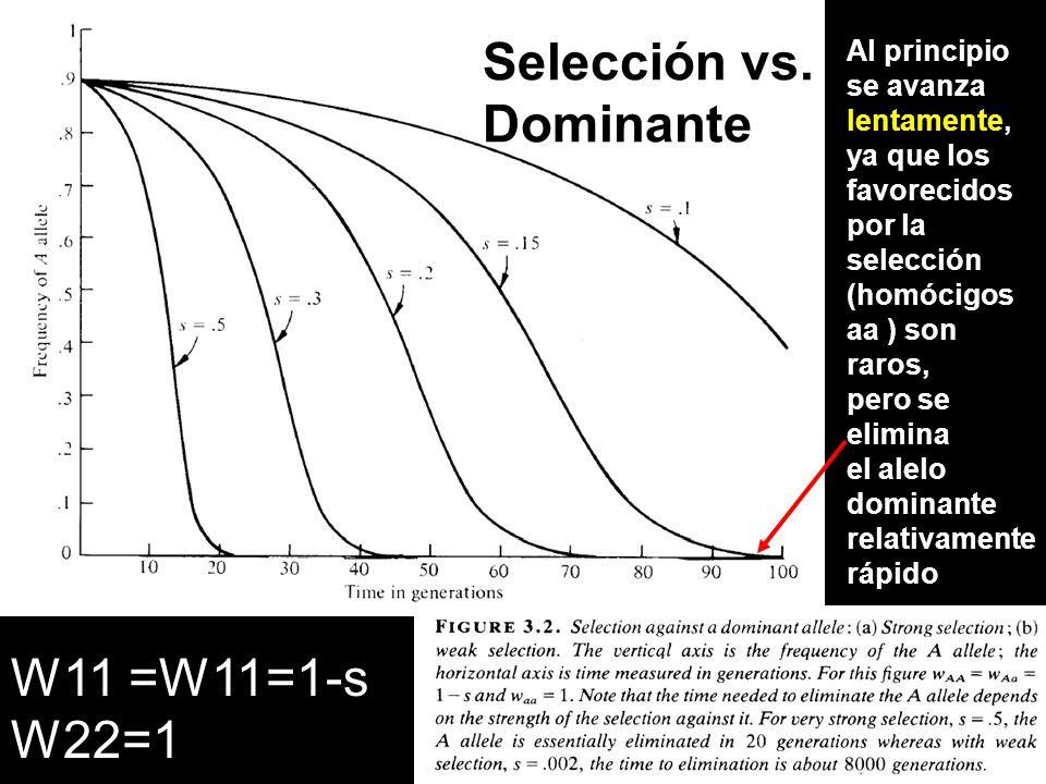 Selección vs. Dominante Al principio se avanza lentamente, ya que los favorecidos por la selección (homócigos aa ) son raros, pero se elimina el alelo