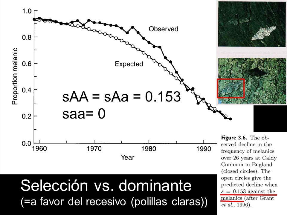 Selección vs. dominante (=a favor del recesivo (polillas claras)) sAA = sAa = 0.153 saa= 0