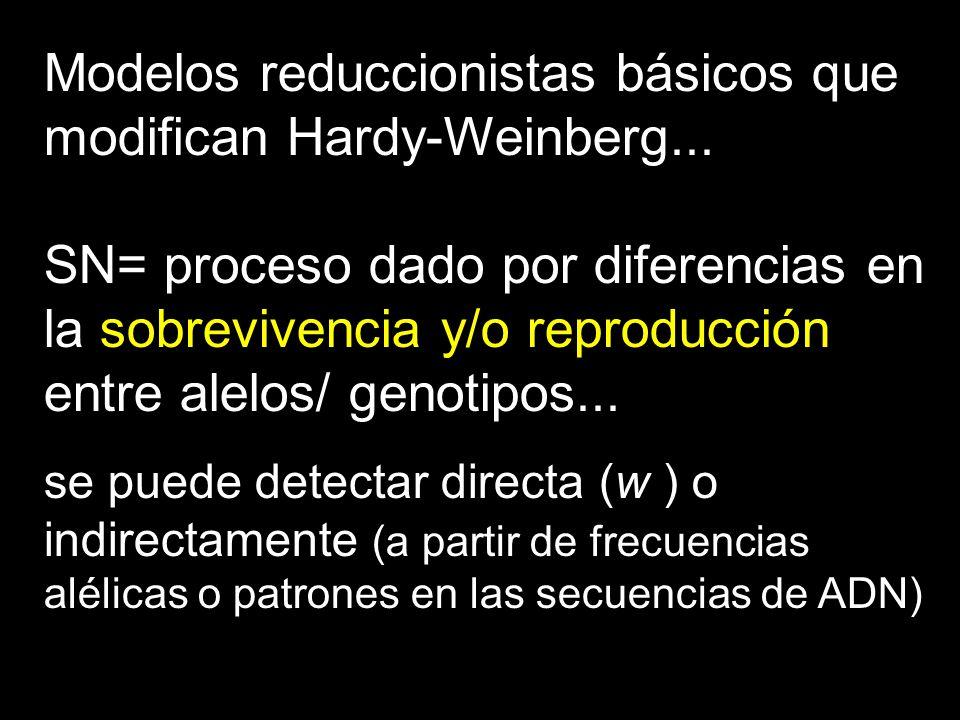 Modelos reduccionistas básicos que modifican Hardy-Weinberg... SN= proceso dado por diferencias en la sobrevivencia y/o reproducción entre alelos/ gen