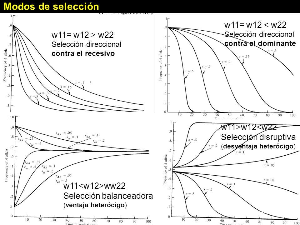 Modos de selección w11= w12 < w22 Selección direccional contra el dominante w11>w12<w22 Selección disruptiva (desventaja heterócigo) w11= w12 > w22 Selección direccional contra el recesivo w11 ww22 Selección balanceadora (ventaja heterócigo)