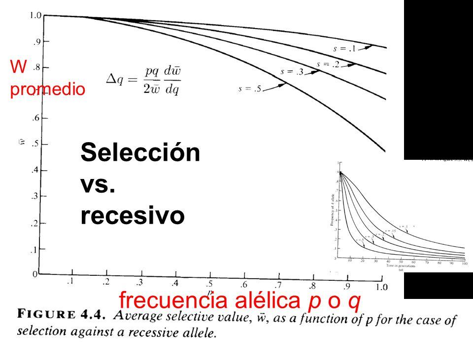 Selección vs. recesivo frecuencia alélica p o q W promedio