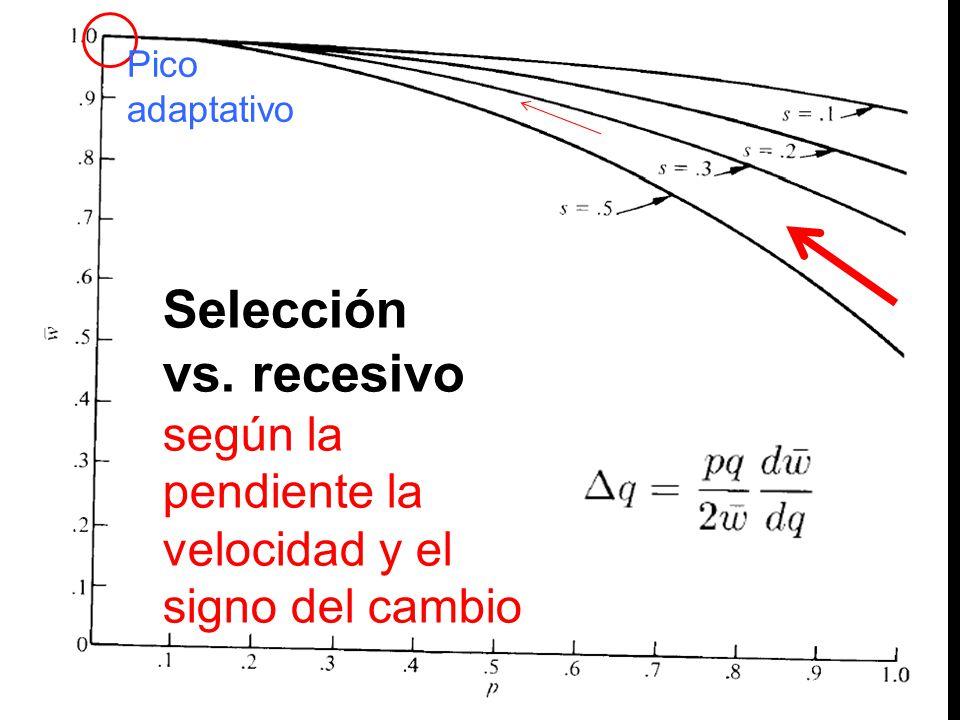 Selección vs. recesivo según la pendiente la velocidad y el signo del cambio Pico adaptativo