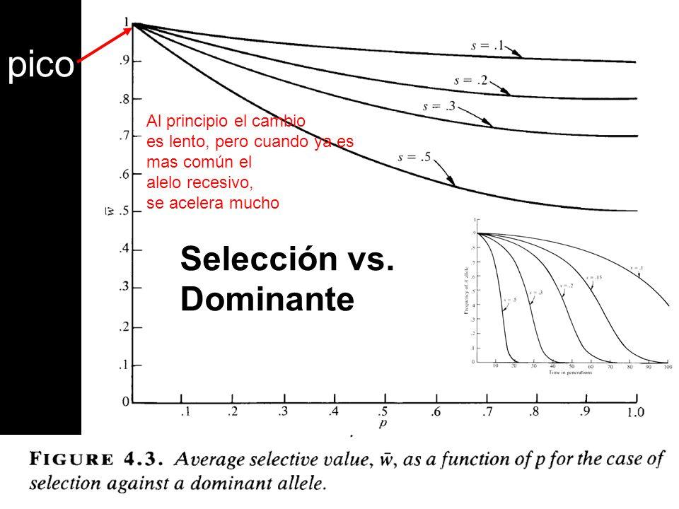 Selección vs. Dominante pico Al principio el cambio es lento, pero cuando ya es mas común el alelo recesivo, se acelera mucho