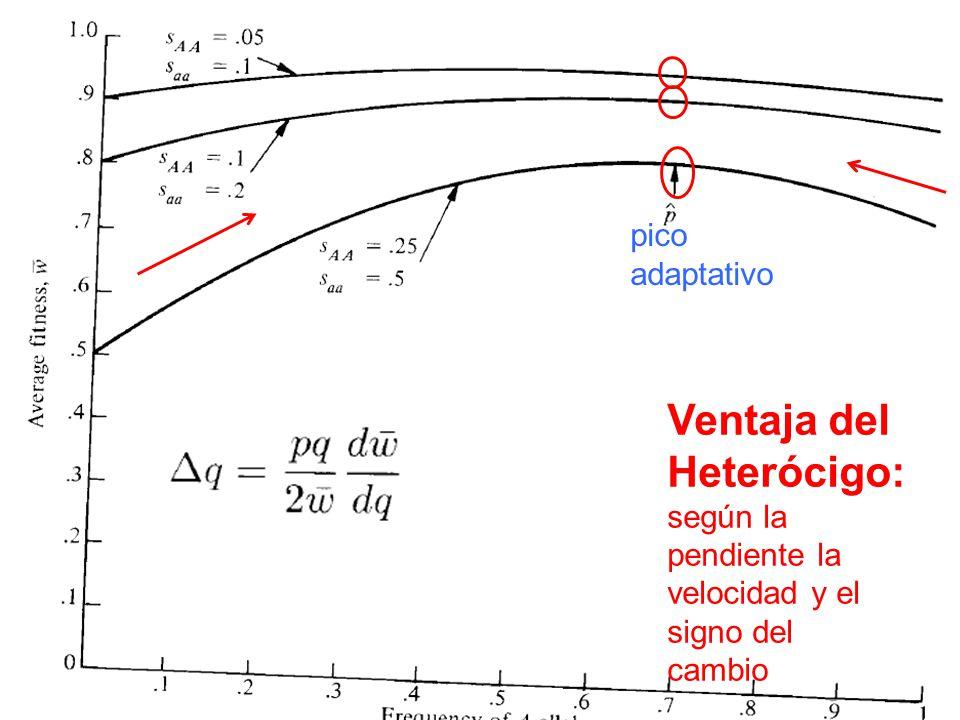 Ventaja del Heterócigo: según la pendiente la velocidad y el signo del cambio pico adaptativo