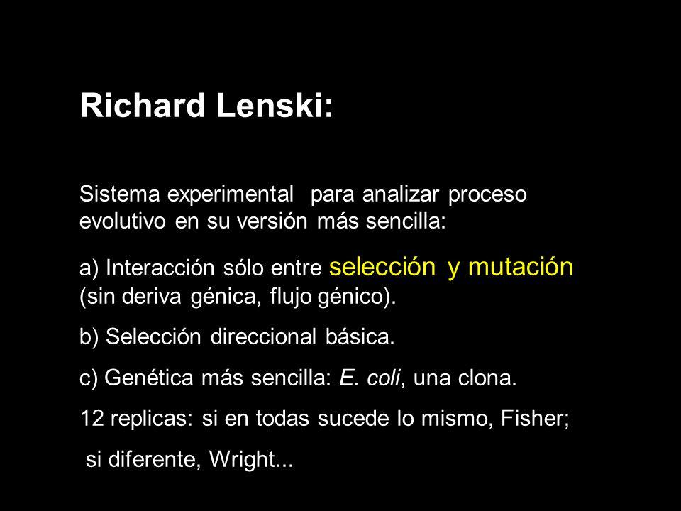 Richard Lenski: Sistema experimental para analizar proceso evolutivo en su versión más sencilla: a) Interacción sólo entre selección y mutación (sin deriva génica, flujo génico).