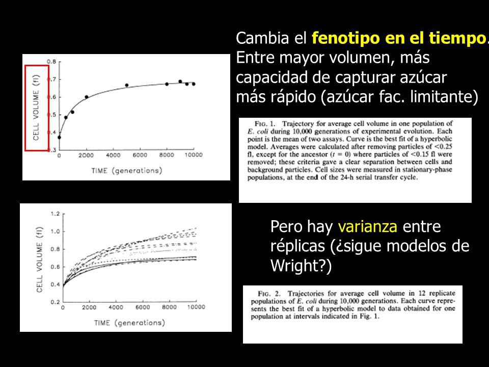 Cambia el fenotipo en el tiempo. Entre mayor volumen, más capacidad de capturar azúcar más rápido (azúcar fac. limitante) Pero hay varianza entre répl