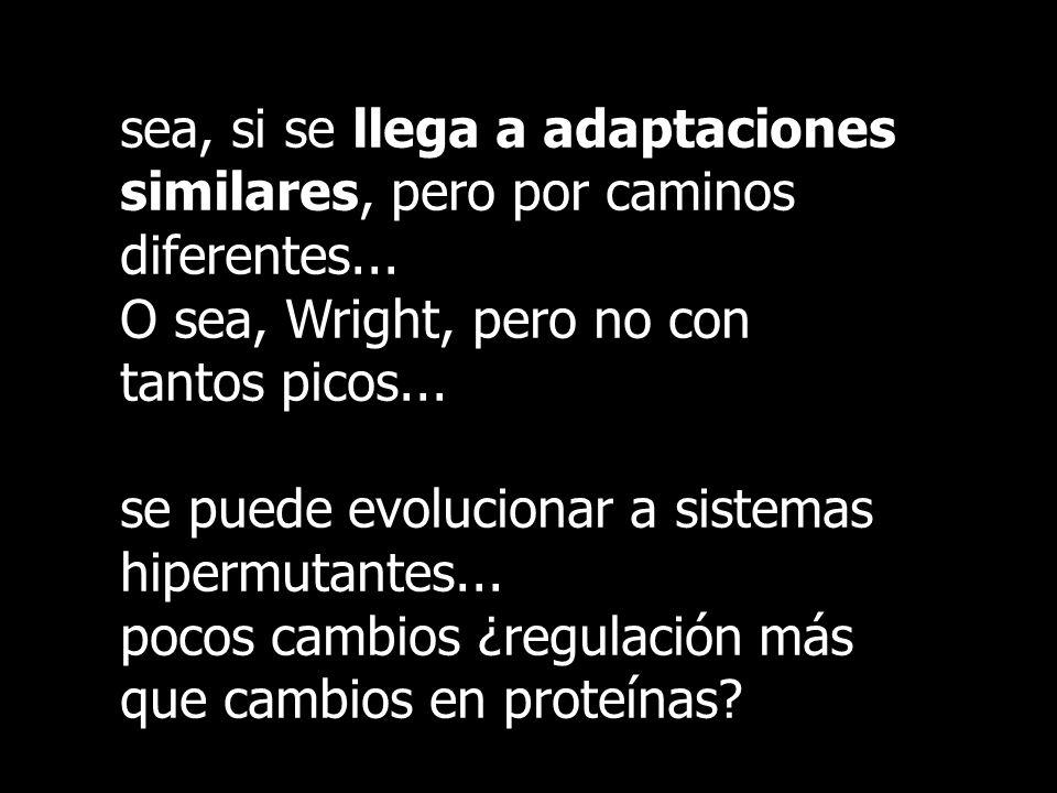 sea, si se llega a adaptaciones similares, pero por caminos diferentes... O sea, Wright, pero no con tantos picos... se puede evolucionar a sistemas h