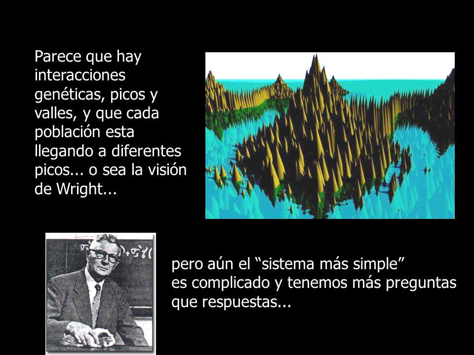 Parece que hay interacciones genéticas, picos y valles, y que cada población esta llegando a diferentes picos... o sea la visión de Wright... pero aún