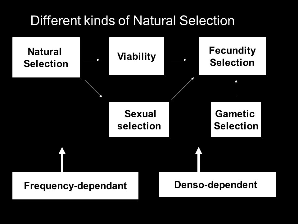 Different kinds of Natural Selection Natural Selection Viability Gametic Selection Fecundity Selection Sexual selection Frequency-dependant Denso-depe