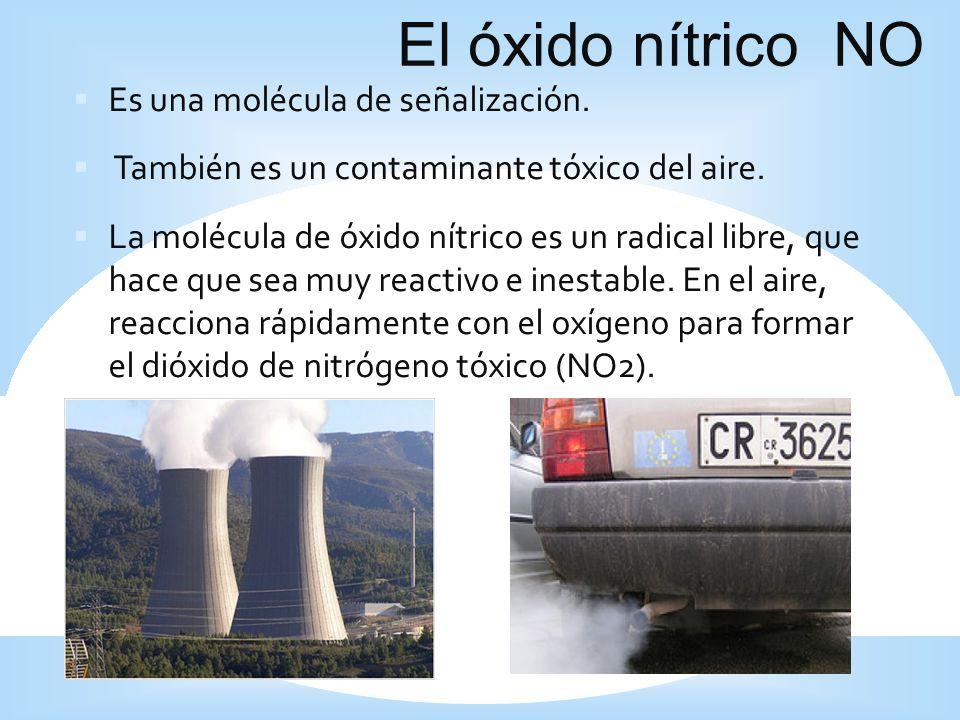 El óxido nítrico NO Es una molécula de señalización. También es un contaminante tóxico del aire. La molécula de óxido nítrico es un radical libre, que