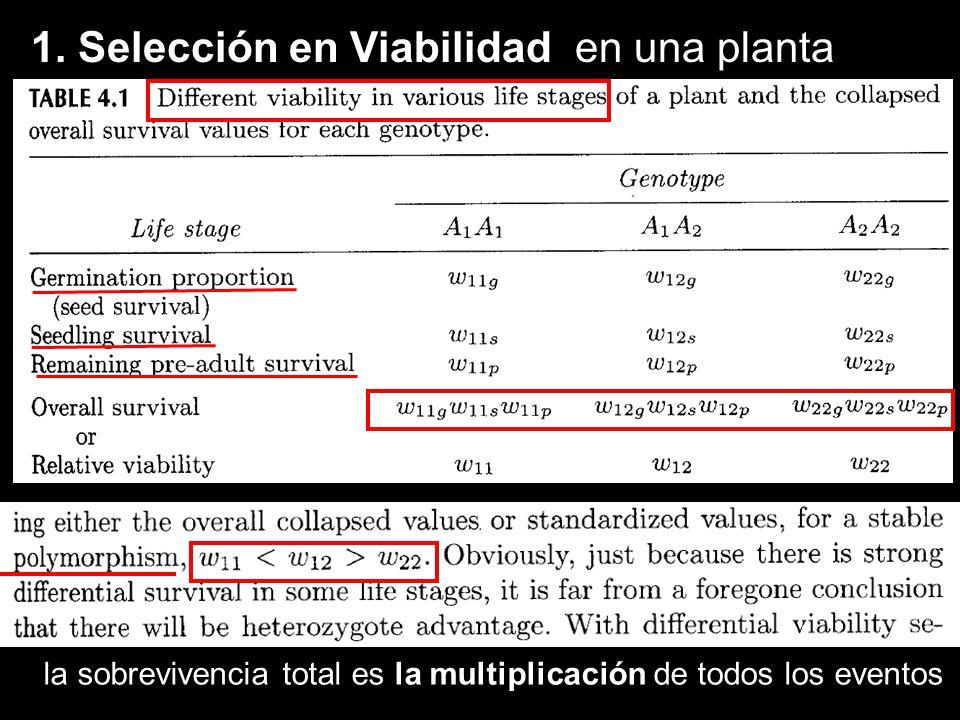 Conclusiones 2: Variación espacial, Modelo de Levene (1953) 2 nichos, Nicho 1 gana A1, Nicho 2, gana A2 si son igual de frecuentes, c1=c2=0.5 eq.