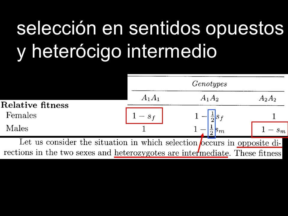Igual que en la Desventaja del Heterócigo un locus 2 alelos: si se comienza arriba o abajo de q =0.5, se fija el alelo más común.