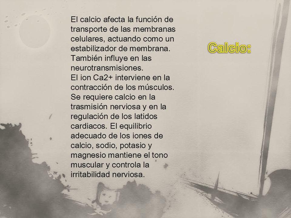 El calcio afecta la función de transporte de las membranas celulares, actuando como un estabilizador de membrana. También influye en las neurotransmis