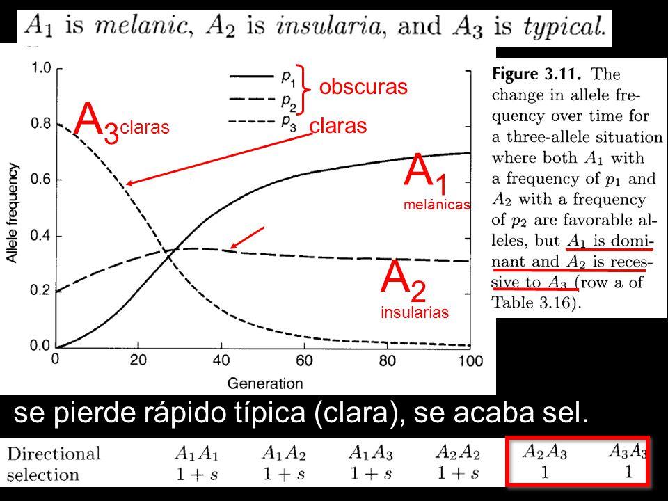 claras obscuras A 3 claras A 2 insularias A 1 melánicas decrece A2 se pierde rápido típica (clara), se acaba sel.