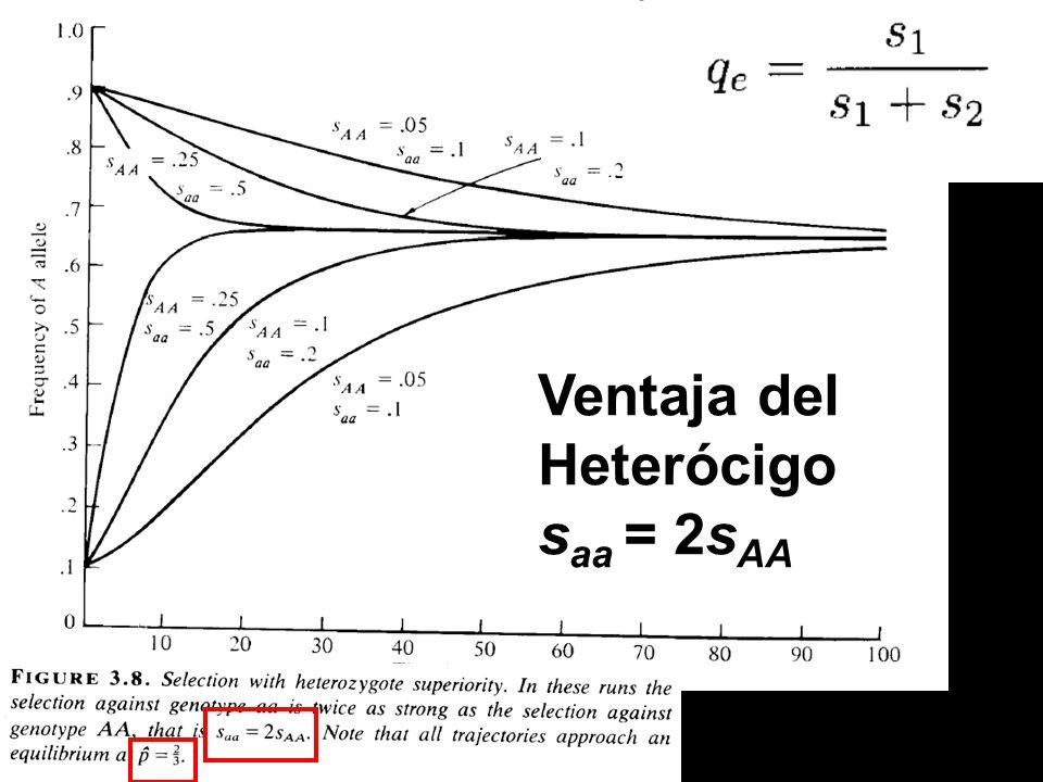 Ventaja del Heterócigo s aa = 2s AA